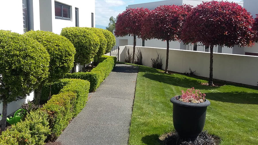 Hedge Bushes: Hedges And Trees - Evergreen Services